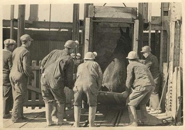 Miners loading a mule into a lead mine
